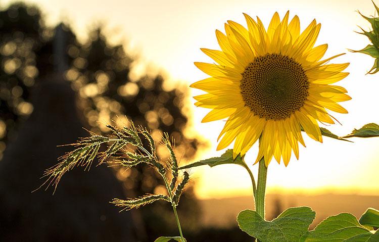 夏の花の花言葉
