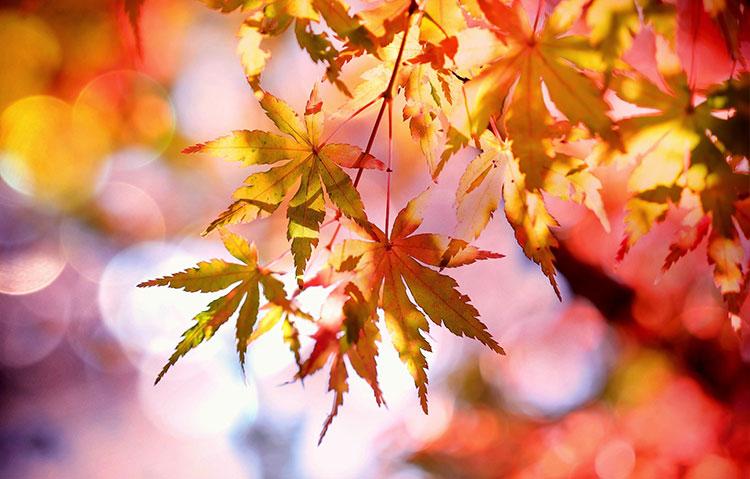 秋の花の花言葉
