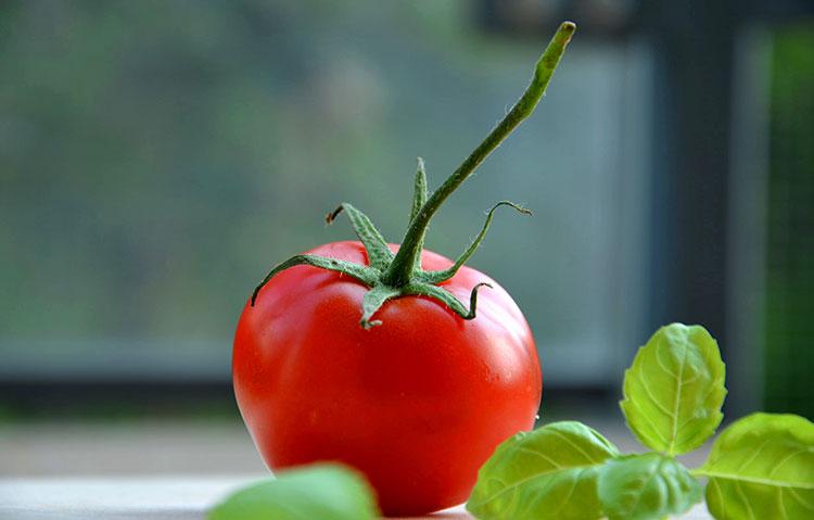 トマト ギフト